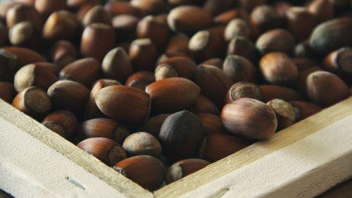 hazel nuts food