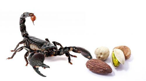 hazelnuts scorpio food
