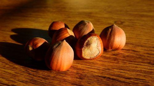 hazelnuts nuts hazel