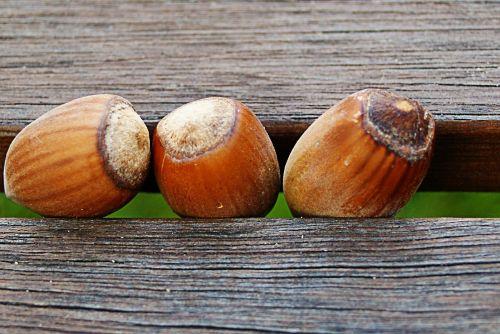 hazelnuts wood bench