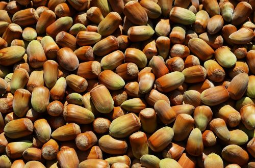 hazelnuts fruit a collection of