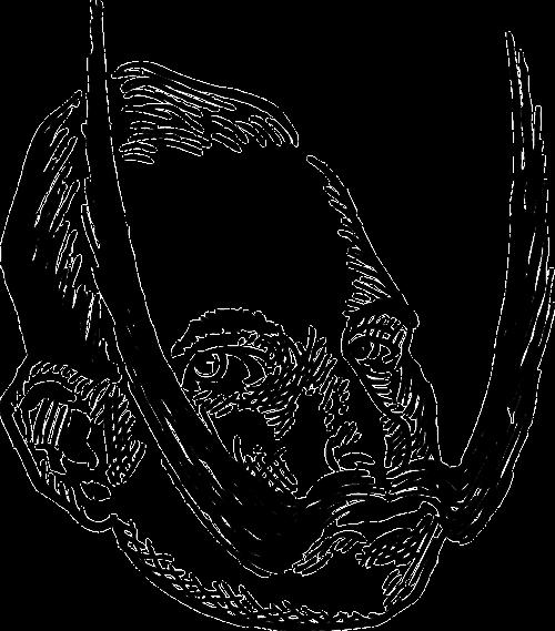 head man portrait