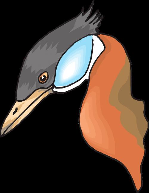 head bird duck