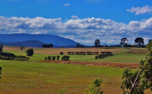 healesville australia nature