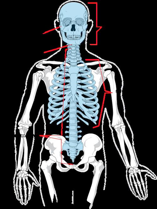 health science backbone