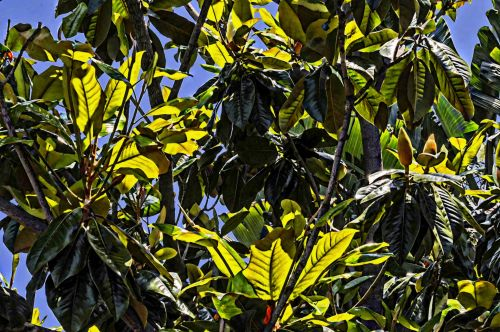 Healthy Green Bush