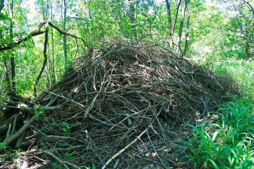 Heap Of Twigs