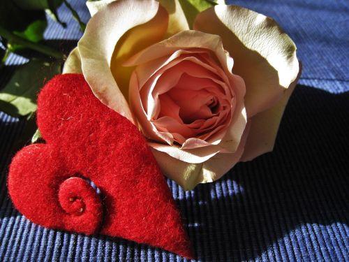 heart rose valentine's day