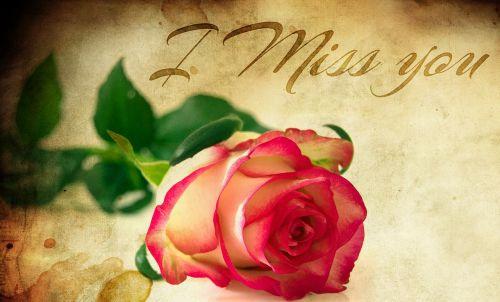 heart roses miss