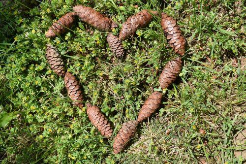 heart tap pine cones