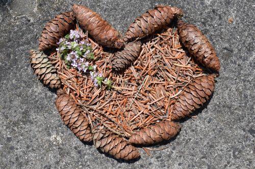 heart pine cones tap