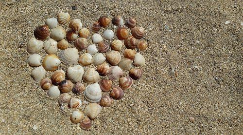 heart mussels harmony