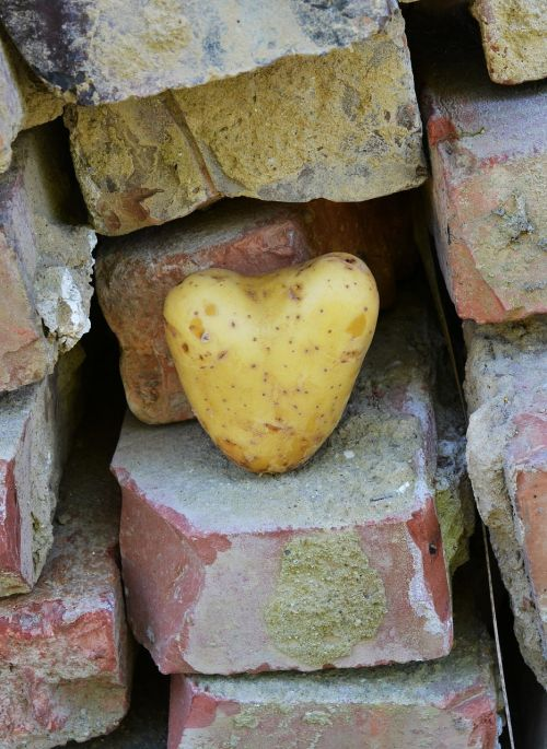 heart potato love