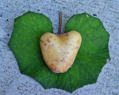 heart potato love