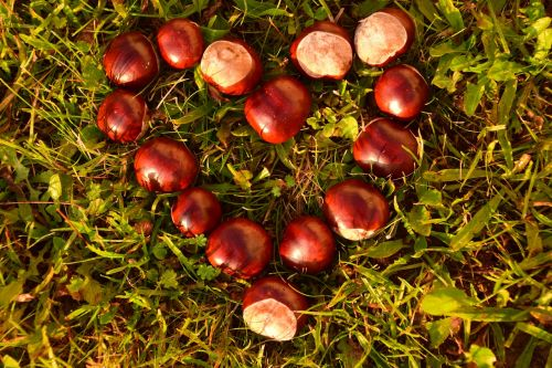 heart chestnut horse chestnut