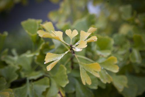 heart sweetheart leaf