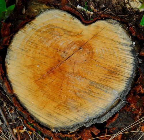 heart wood love