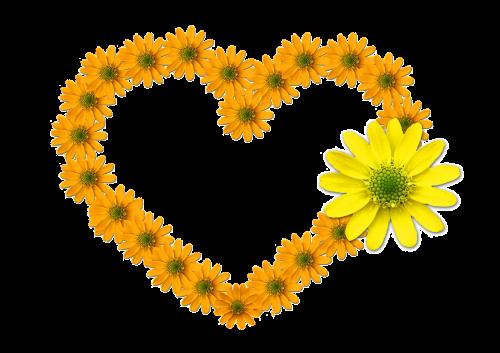 heart flower heart bloom