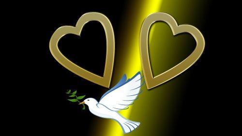 heart dove love