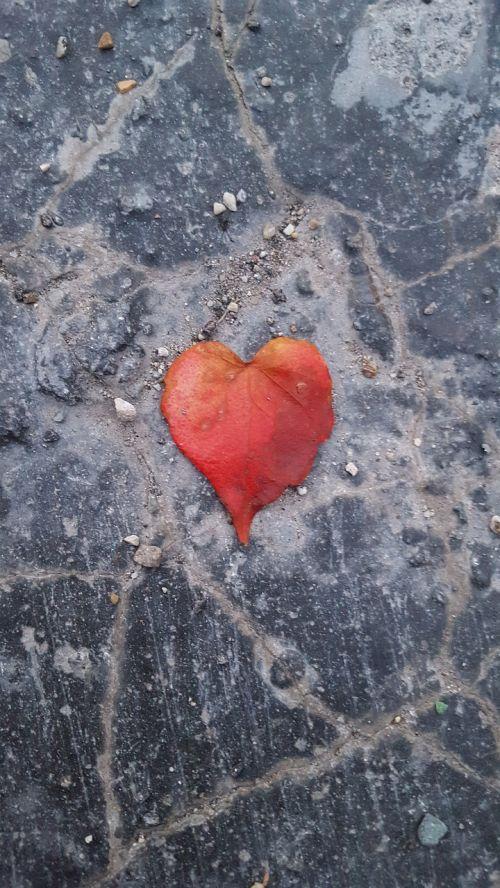 heart herzchen leaf