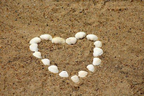 heart  shells  sand