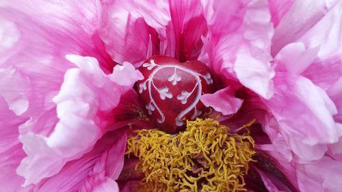 heart flower blossom