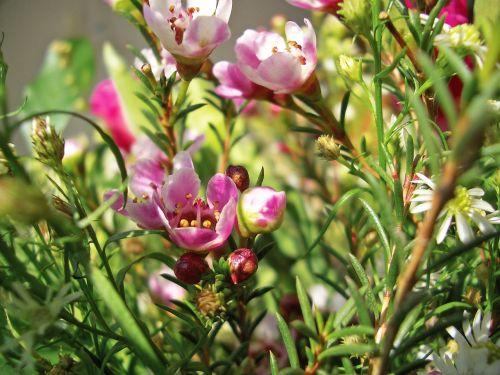 heather heide ericaceae
