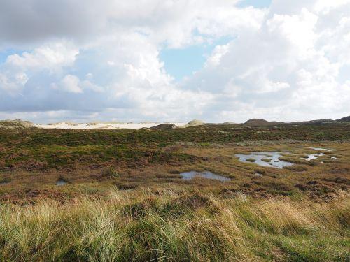 heathland dunes peat bog