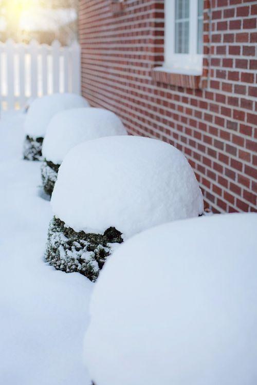 stiprus sniegas,sniegas,sniegas krūmais,sniegas,lauke,žiema,padengtas