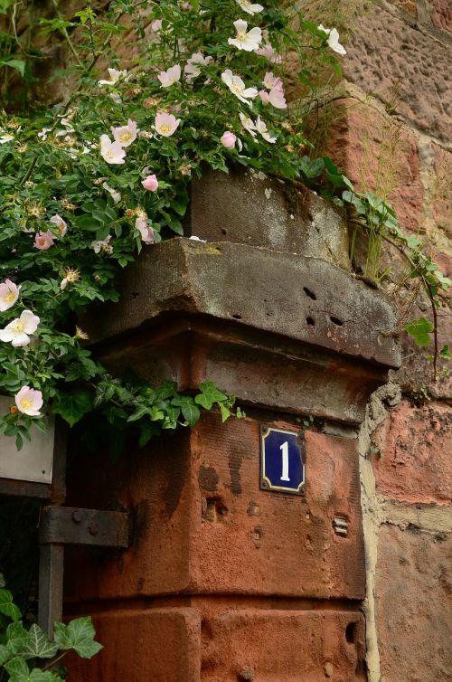 heck roses wall post