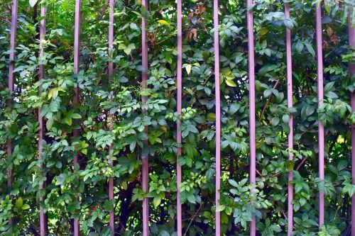 apsidraudimas, augalas, gamta, apsidrausti