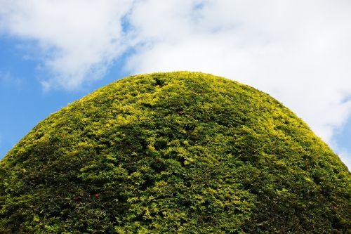 hedge round topiary