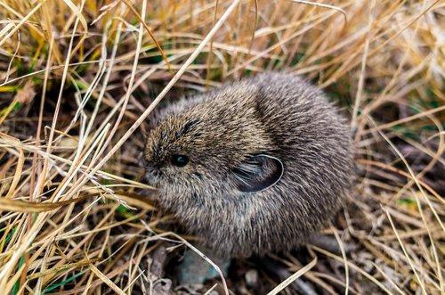 hedgehog  animal  cute