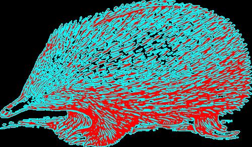 echidna hedgehog hedge-hog