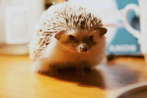 hedgehog animal skewers