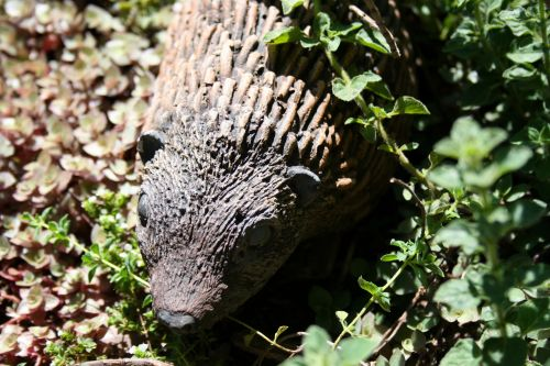 Hedgehog Statue In The Garden