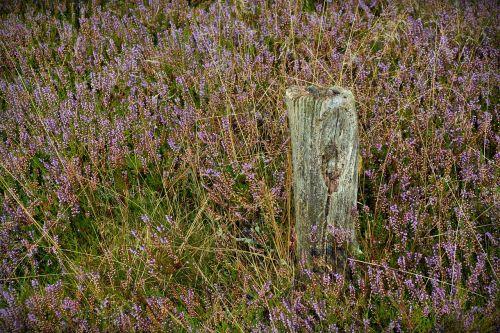 Heide,krūva,gamta,virėja,lüneburg heath,gamtos rezervatas,stendas,takas,medis,Heathland,žygiai