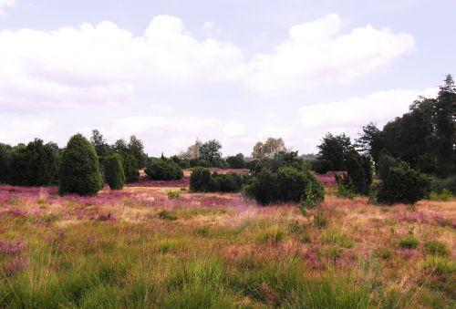 heide heather august