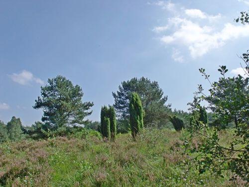 heide heathland nature