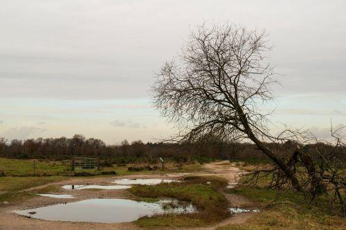 heide tree puddle