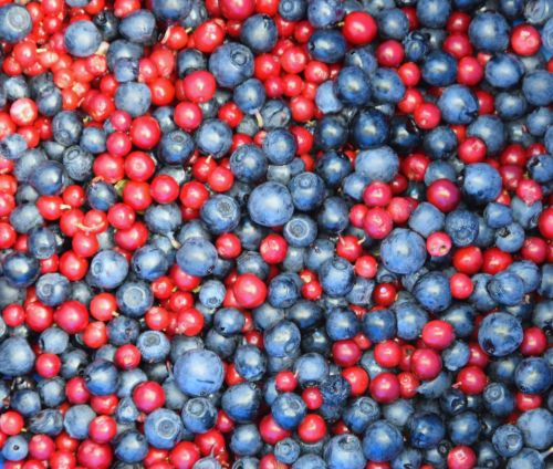Blueberry And Cranberry