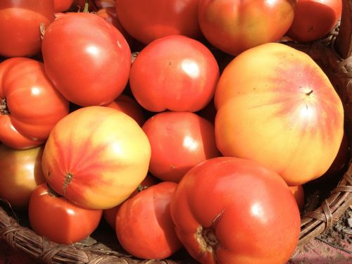 heirloom tomatoes red yellow