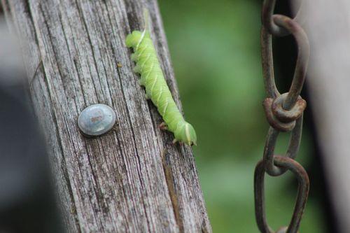 Hello World Caterpillar