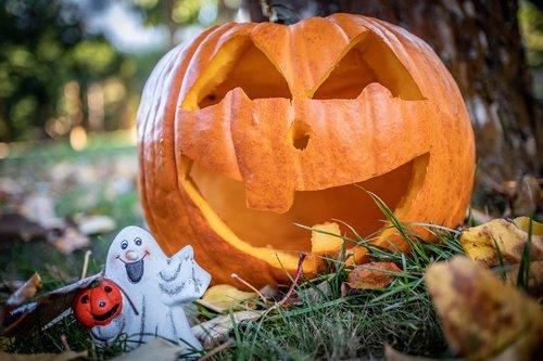 helloween  pumpkin  halloween