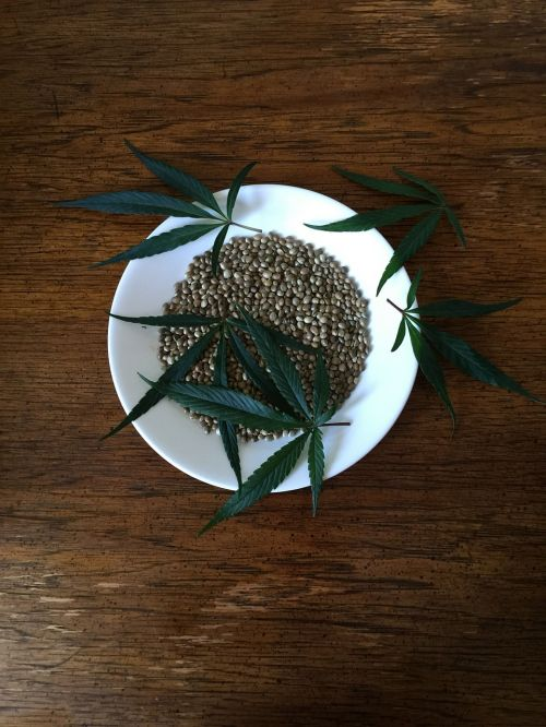 hemp seeds sativa hemp