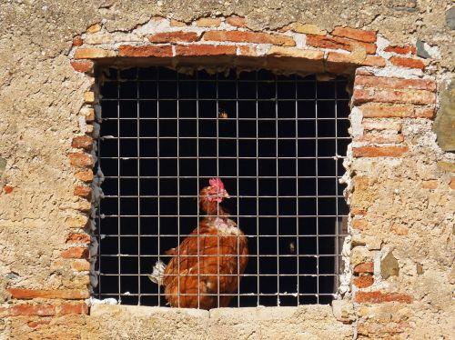 hen window bars