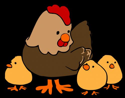 hen chicken poultry