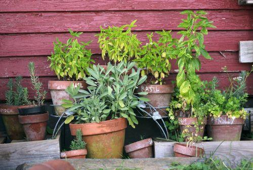 herb garden pots garden