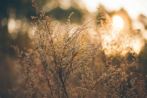 herbage pasture grass