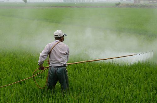 herbicide avignon in rice field